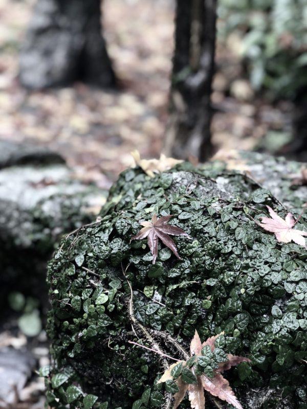 苔的osatokyo