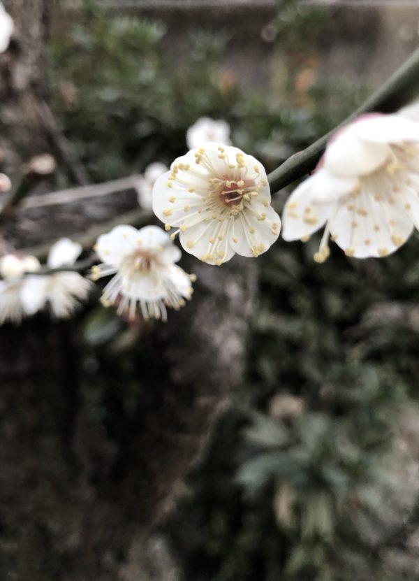 梅osatokyo