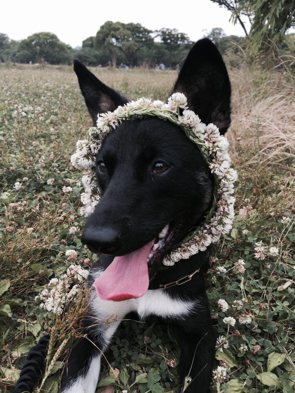 花飾りosatokyo